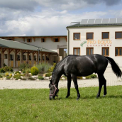 Pro Equus Lovaspark